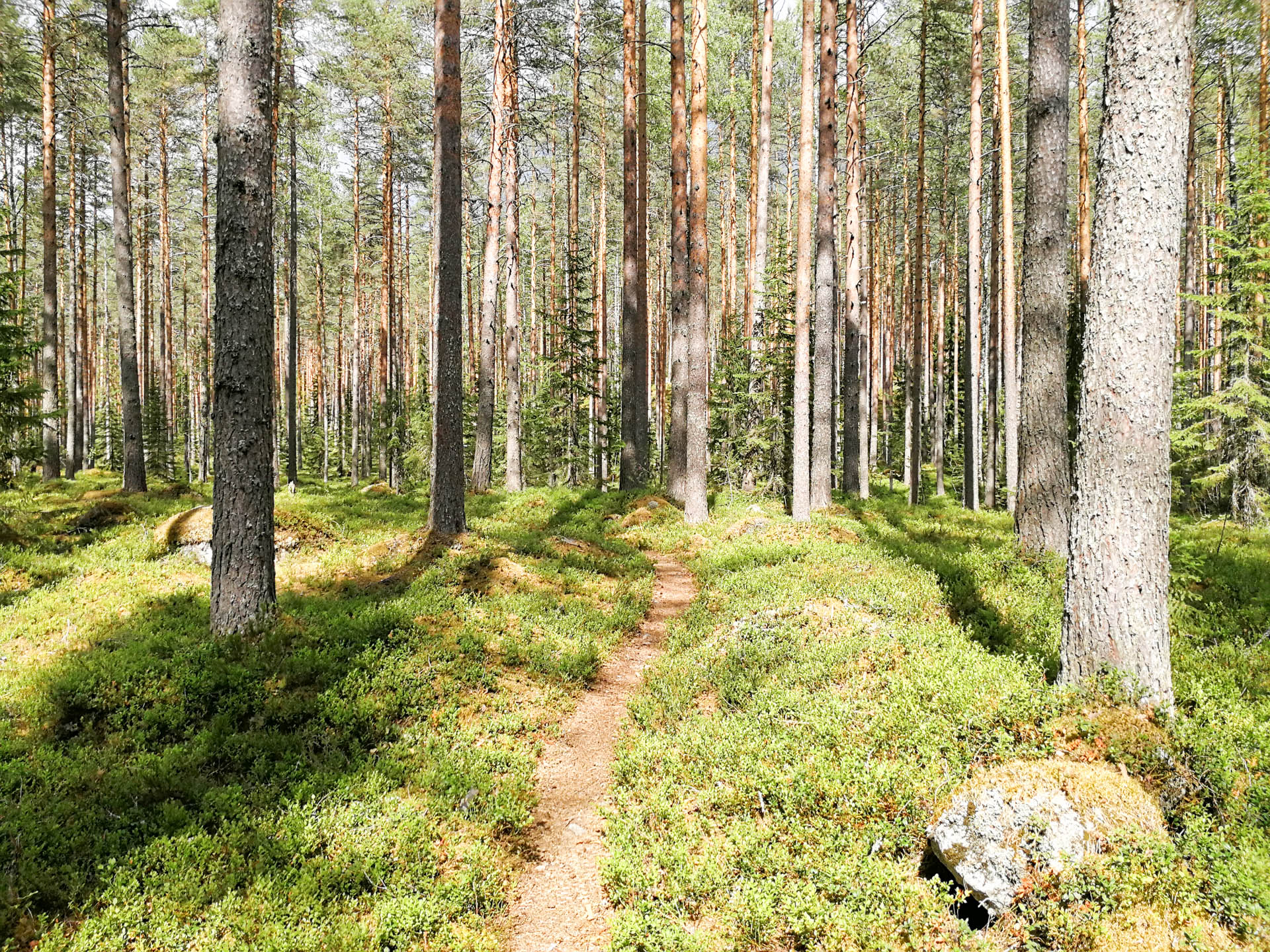 MTB Ukonkangas maastopyöräreittiin kuuluu hiekkatietä ja polkua mitä polkea.
